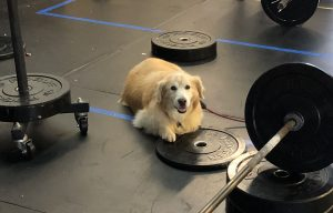 Dog at Gym
